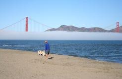 Homme marchant son crabot le long de la plage Photographie stock libre de droits