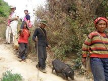 Homme marchant son porc Images stock
