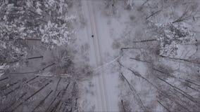 Homme marchant sur le chemin forestier clips vidéos