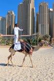 Homme montant un chameau sur la plage Image stock