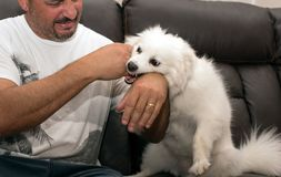 Homme mordu par le chien Image stock