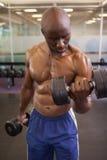 Homme musculaire s'exerçant avec des haltères dans le gymnase Photographie stock