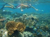 Homme naviguant au schnorchel sur le récif coralien Images libres de droits