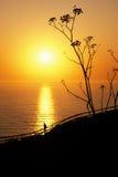 Homme observant le coucher du soleil méridional de la Californie photographie stock