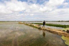 Homme observant les gisements de riz près de Valence images stock