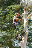 Homme occupé dans l'arbre d'abattage Photo stock