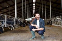 Homme ou agriculteur avec des vaches dans l'étable à l'exploitation laitière Photo libre de droits
