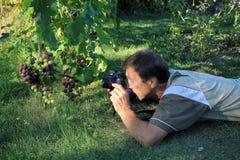 Homme photographiant le groupe de raisins dans le jardin Photographie stock