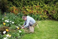 Homme plantant des fleurs Photo stock