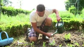 Homme plantant des jeunes plantes en terre sur l'attribution banque de vidéos