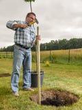 Homme plantant l'arbre images libres de droits