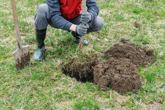 Homme plantant un arbre Photographie stock libre de droits