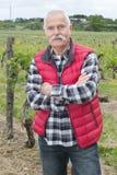 Homme plus âgé attentif dehors dans les wineyards Photo libre de droits