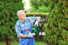 Homme équilibrant un arbre dans un jardin Photographie stock libre de droits