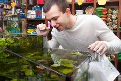 Homme sélectionnant les poissons tropicaux photos stock