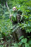 Homme sauvage de forêt Photographie stock