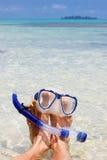 Homme se reposant à la plage Photo libre de droits