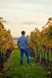 Homme se tenant dans le vignoble d'automne au coucher du soleil photographie stock