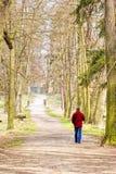 Homme seul marchant dans la forêt Photo stock