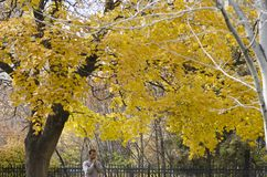 Homme seul priant un jour d'automne Image stock