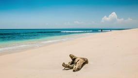 Homme seul sur une plage banque de vidéos