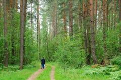 Homme solitaire marchant lentement par les bois Photo stock
