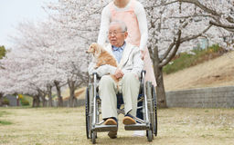 Homme supérieur asiatique s'asseyant sur un fauteuil roulant avec le travailleur social et le chien Photo libre de droits