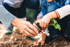 Homme supérieur avec le grandaughter faisant du jardinage dans le jardin d'arrière-cour Photographie stock libre de droits