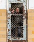Homme supérieur derrière la porte barrée verrouillée en cellule Images libres de droits