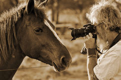 Homme supérieur photographiant le visage de chevaux de plan rapproché Photographie stock libre de droits