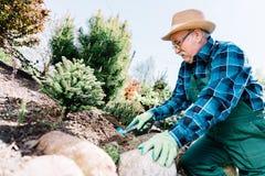 Homme supérieur plantant des usines dans un jardin Photos stock