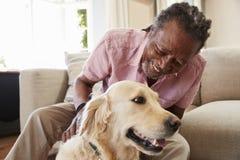 Homme supérieur s'asseyant sur le chien de Sofa At Home With Pet Labrador photos libres de droits