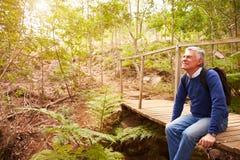 Homme supérieur s'asseyant sur un pont dans une forêt, regardant loin Photo stock