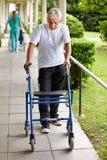 Homme supérieur sur une promenade avec le marcheur Images stock