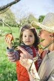 Homme supérieur tenant les pommes adorables de cueillette de petite fille Photo stock