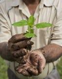 Homme supérieur tenant une jeune plante verte Photo stock