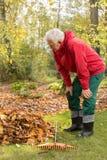 Homme supérieur travaillant dans un jardin pendant l'automne Photos stock