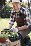 Homme supérieur avec les herbes fraîches Photographie stock libre de droits