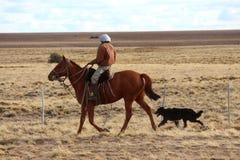 Homme sur le cheval avec le chien de bétail Photographie stock