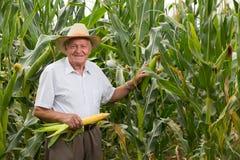 Homme sur le maïs de champ avec des épis de blé Photographie stock libre de droits