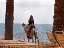 Homme sur un chameau sur la plage photos libres de droits