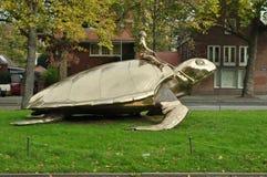 Homme sur une tortue image stock