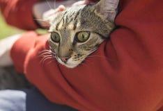 Homme tenant le chat de sans-abri de strret Images libres de droits