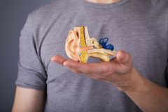 Homme tenant le modèle de l'oreille interne humaine dans des mains photographie stock