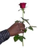 Homme tenant une rose Photographie stock libre de droits