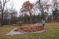 Homme tirant la bâche avec leaves_3 Image stock