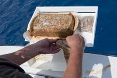 Homme travaillant avec l'amorce de poissons Images libres de droits