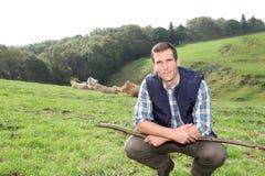 Homme travaillant dans le domaine avec des bétail Photos stock
