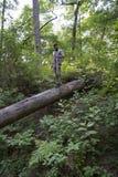 Homme trimardant dans la forêt de nation photo libre de droits