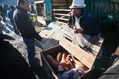 Homme vendant des porcs sur un marché extérieur Image stock